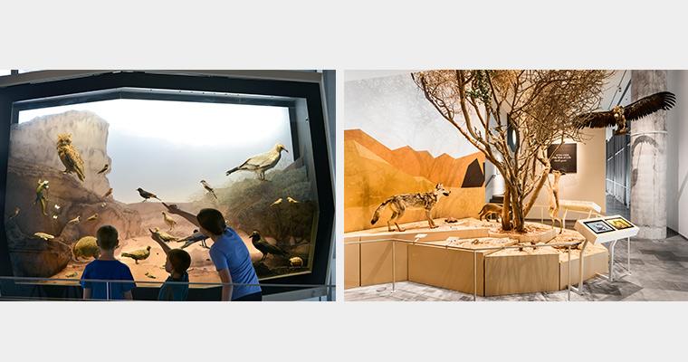 Desert Habitat and Web of Life Exhibits