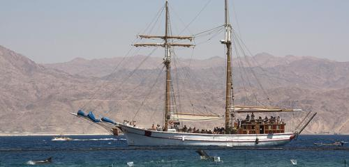 Wood sheep cruise in red sea picture